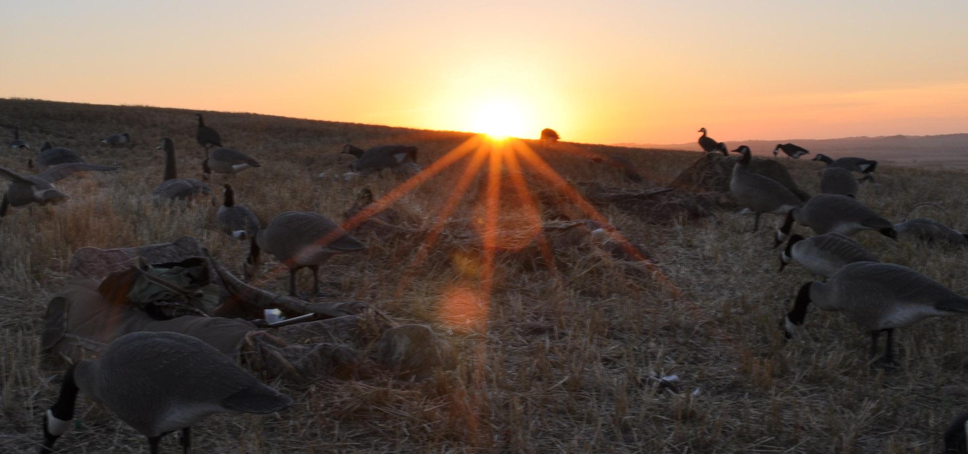 Saskatchewan Canada Waterfowl Hunting