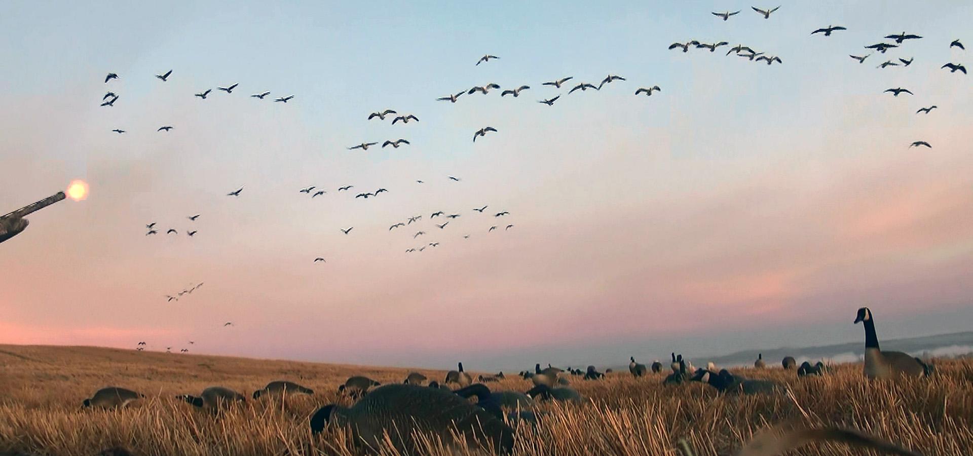 waterfowl hunting Saskatchewan Canada